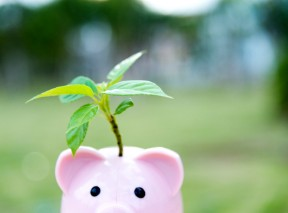 piggy bank growing a plant as a self-directed sep ira fast - blog (2)