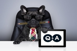 french bulldog wearing glasses & a tie, sitting in a chair at a conference table with a pencil in it's mouth, holding a Q&A sign